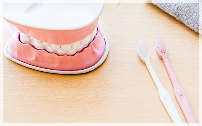 歯の模型と歯ブラシの画像